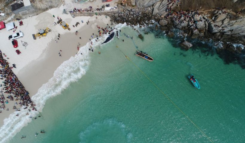 Foto e vídeo: Ricardo Malta/ Arraial do Cabo Capital do Mergulho